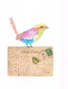 Postal Bird Watercolor