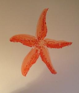 Coral Sea Star