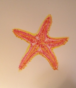 Orange  and Pink Sea Star